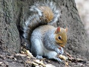 I love squirrels . They're like cute little puffballs of disaster.