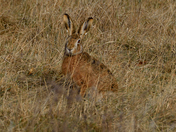 Hare What You Looking At.