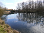 Reflections on Culford lake on a sunny February day.