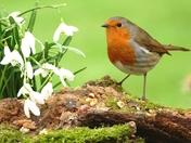Springtime arrives.