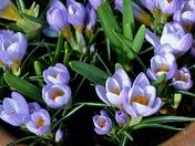 Spring has arrived in Aldborough Hatch!