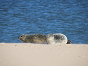 Sun, Sand and Seals