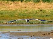 heron cley marsh
