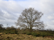 Syderstone Common