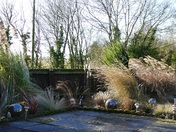 Strong winds batter the ornamental grasses
