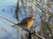 Robin taken at Cookley Lake