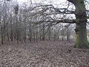 Ellenbrook Fields