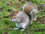 Squirrels in the Abbey Gardens
