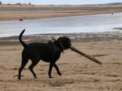 Me and My Stick