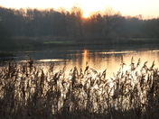 Water: Sunset over Pensthorpe