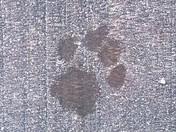 Frosty Paw