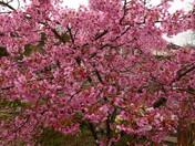 Bloom-Spring