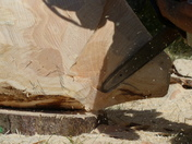 Shadow. From The Wood Carver