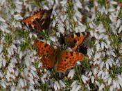 Butterflies Galore.