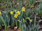 Seeing Spring