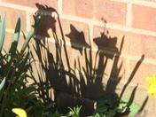 Shadow - around the garden