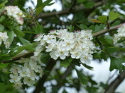 As We Are Heading For Blossom Time