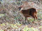 Inquisitive deer at Minsmere