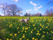 Spring has arrived on Marriotts way