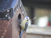 Busy time nest building