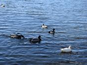 More birds on Leathes Ham