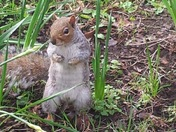 Nice squirrel