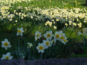 SPRING IN NORWICH CASTLE GROUNDS