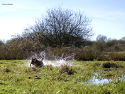 Scout having a splashing time  in the sun