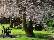 Spring serenity