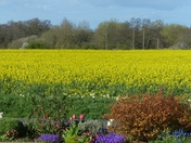 Spring. Beautiful Field Of Yellow