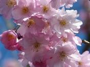 Spring. Pretty Blossom