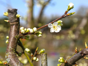 Photo Challenge - Spring arrives on the allotment site