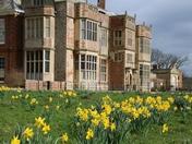 Spring: Felbrigg Daffodils