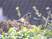 Garden Visitor