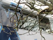 Bus Stuck in Tree.