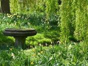 Spring in Cranbrook Park