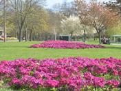 Cranbrook Park