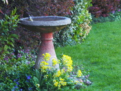Bird bath with bird bathing