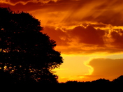 Yellow sunsets C