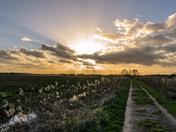 Pumphouse lane sky