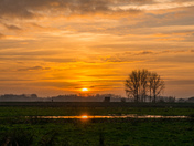 Buckenham Marsh Sun