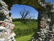""""""" Window"""" Dead Tree Window"""