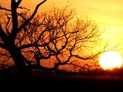 Yellow sunsets 1
