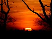 Yellow sunsets 3