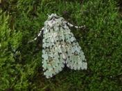 Local wildlife - Moths