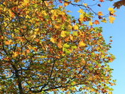 Glorious Autumnal Colours