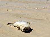 Local Wildlife - Seals