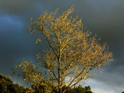 Autumn colours and storms