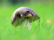 Fungi Season again
