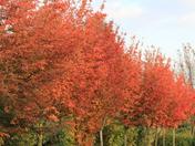 Autumn Colours - leanes